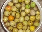 продам помидори солоні зелені