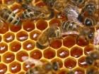 Завод закупает мед
