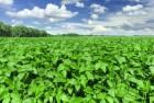 јгроцентр семена предлагает посевной материал ¤рых культур