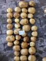 Картопля 2 сорту сорту Леді Клер, оптом