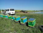 Продам Пчелопакеты с Доставкой по Украине !