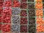 Оптовая продажа (малина, ежевика, черешня, виноград)