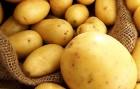 Продам насінневу картоплю Ривьера