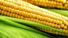 Кукурузный жмых
