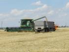 Куплю пшеницу, семечку, ячмень, рапс, кукурузу.