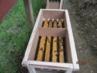 Бджолині пакети