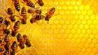 Закуповуємо мед оптом центральна Україна