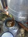 Продам мед соняшниковий 7 тонн