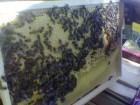 Продам мед липовий 1 тонна