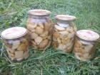 продам белые маринованые грибы