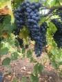 Реализуем органическое вино опт  мелкий опт