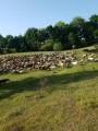 продам стадо овец баранов
