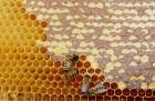 Продам пакети бджіл