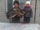 Продам кроликов породы бельгийский обр(фландр)