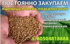 2 кл пшеница