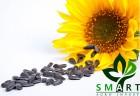 «Смарт Агро Инвест»  закупает семена подсолнечника дорого.