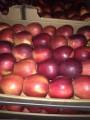 яблоко зеленое и красное