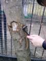 ќбрезка старых деревьев восстановление старых  садов.