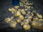 Унікальна технологія вирощування картоплі (фільм - диск DVD)