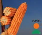 Семена кукурузы по низким ценам от лучших производителей