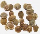 Продам насіння пастернаку  Петрик
