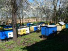Продам пчелы