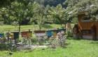 Продам пчелопакеты пчел карпатской породы