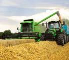 Куплю влажную кукурузу с поля