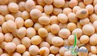 Семена сои сорт Максус (Монсанто США)