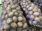 картофель бюджетный