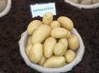 Продам семенной картофель третьей репродукции 3,10 грн