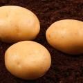 Продам семенной картофель второй репродукции 6,10 грн