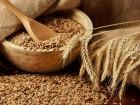 Куплю пшеницу, кукурузу, отходы кукурузы