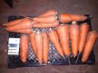 Продам молодую морковь сорта Абако