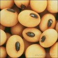 Закуповуаємо сою (соя) ГМО (не ГМО)