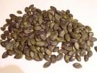Продам семена тыквы голосемянной сорт Австрийский