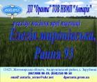 Насіння ярої пшениці Елегія миронівська, Рання 93
