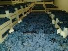 виноград в Молдавии