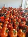 помидор с Албании