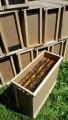 Продам і привезу бджолопакети. Карпатка, Дніпро-Запоріжжя