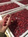 Продам малину с поля (свежую, замороженную) сорт Марабелла и Лыбидь