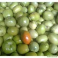 Продам зеленый помидор