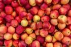 яблока на переработку
