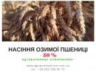 Насіння озимої пшениці (компенсація -80%)
