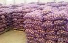 фермерское хозяйство реализует картофель оптом