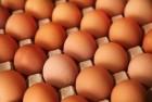 яйцо куриное коричневое —-0