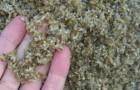 свежая (сырая) пивная дробина