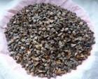 семена √речихи сорт Ђ—лобожанкаї