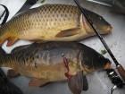Продам живую рыбу (карп)