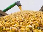 Закупка кукурузы. Вся Украина
